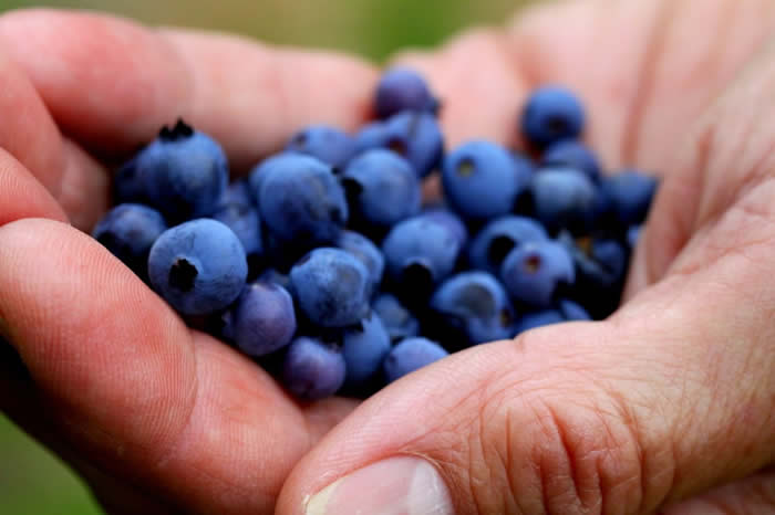 Sober September superfoods: #2 blueberries