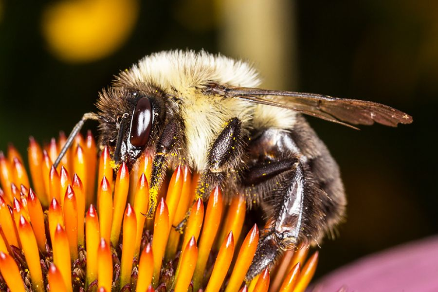 Why We Need Bees For Good Health